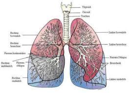 vastzittend slijm in longen