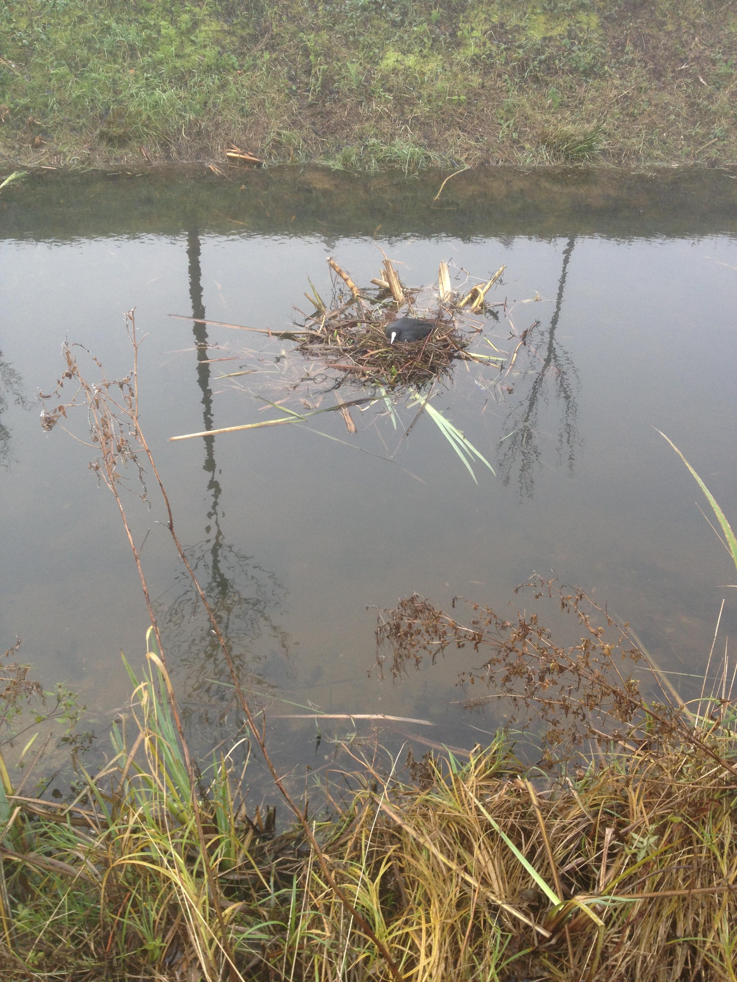 Vogels en natuur in friesland