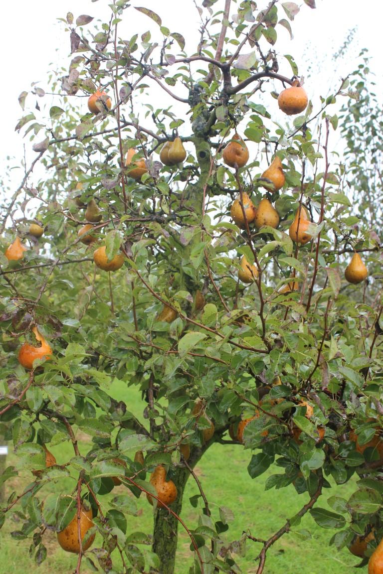 fruit yn fryslân