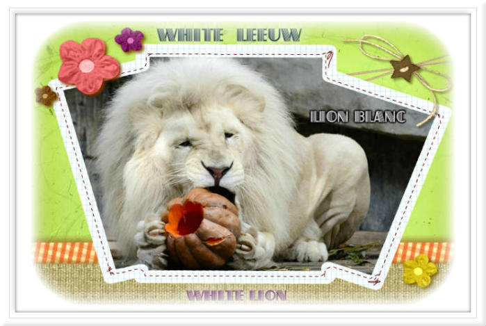 blogs louisette , scrap, lions, leeuwen, white ,blanc, witte