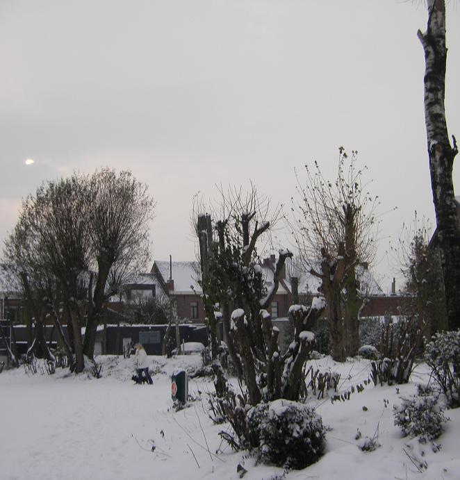 Lebbeekse blog 2 - Eigentijdse tuinier ...
