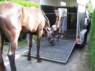 paard wil niet op de trailer
