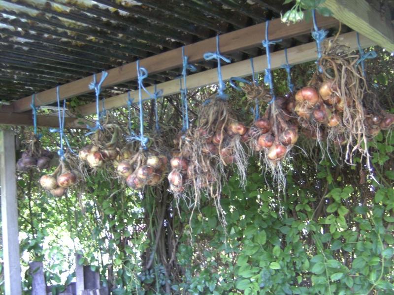 drogen van uien