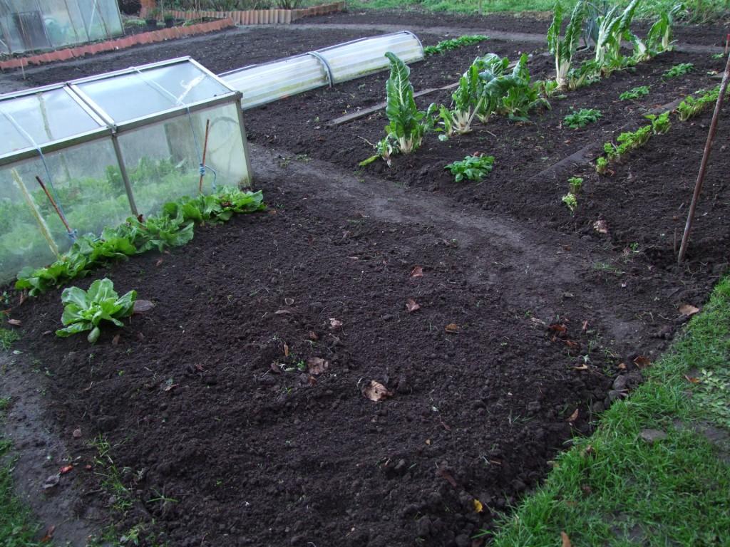 stand zon en tuin