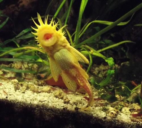 Aquarium zonder veel onderhoud en kosten, toch mooi en gezond
