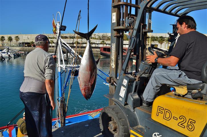 rauwe tonijn zwanger